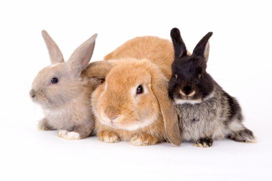 the rabbit test