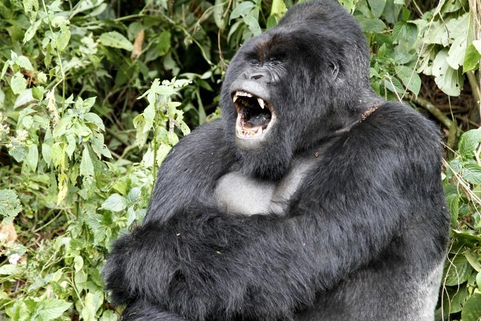 animals, animal, dental, teeth, primal