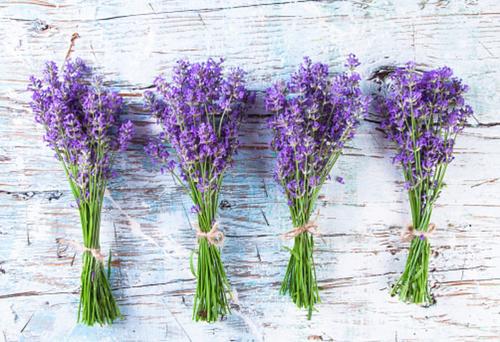 lavender-helps-bruxism