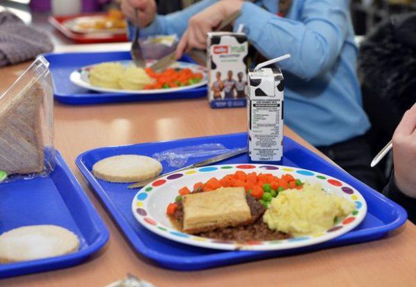 pudding, school meals, dentist, obese children